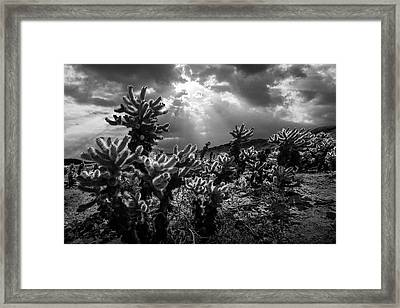 Framed Print featuring the photograph Cholla Cactus Garden Bathed In Sunlight In Black And White by Randall Nyhof