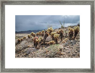 Cholla Family With Guests Framed Print by Shuwen Wu