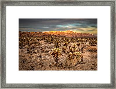 Cholla Garden Framed Print by Peter Tellone