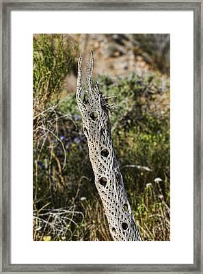 Cholla Skeleton Framed Print