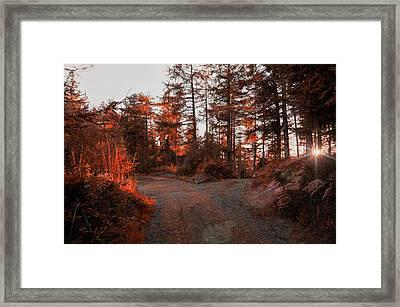 Choose The Road Less Travelled Framed Print
