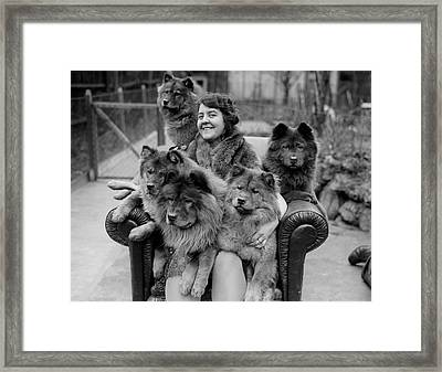 Chow Chow Framed Print by Fox Photos