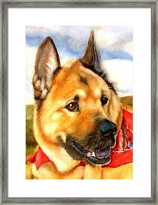 Chow Shepherd Mix Framed Print by Marilyn Jacobson