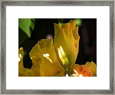 Framed Print featuring the digital art Yellow Iris by Stuart Turnbull