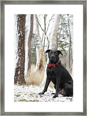 Christmas Best Framed Print by Julie Smith