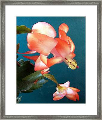 Framed Print featuring the digital art Christmas Cactus by Deleas Kilgore