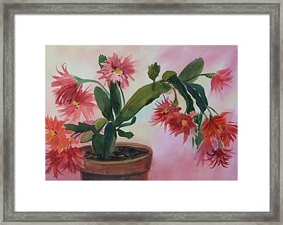 Christmas Cactus Framed Print by Dianna Willman