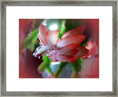 Christmas Cactus Framed Print by EricaMaxine  Price