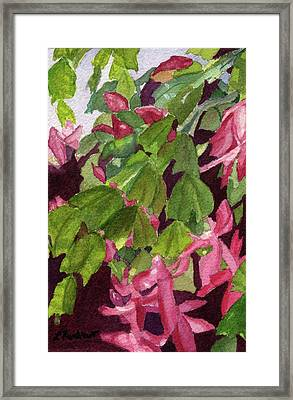 Framed Print featuring the painting Christmas Cactus by Lynne Reichhart