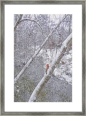 Christmas Card - Cardinal In Tree Framed Print
