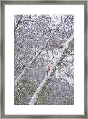Christmas Card - Cardinal In Tree Framed Print