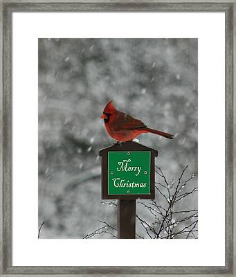 Christmas Cardinal Male Framed Print