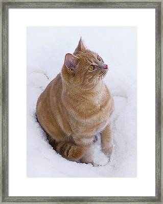 Christmas Cat Framed Print by Jacqi Elmslie