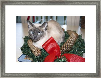 Christmas Cat Framed Print by Sally Weigand