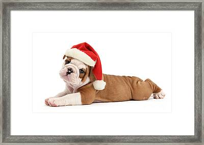Christmas Cracker Framed Print