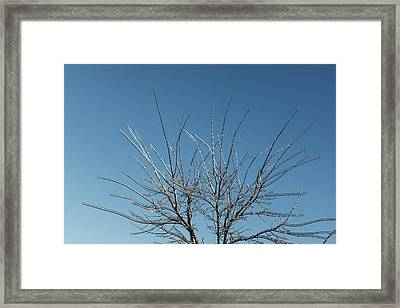 Christmas Decorations By Mother Nature - Brilliant Blue And White Glow In The Sky Framed Print by Georgia Mizuleva