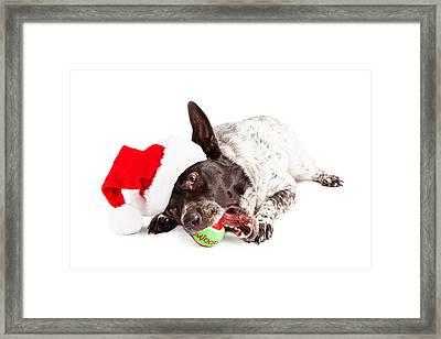 Christmas Dog Chewing On Tennis Ball Framed Print by Susan Schmitz