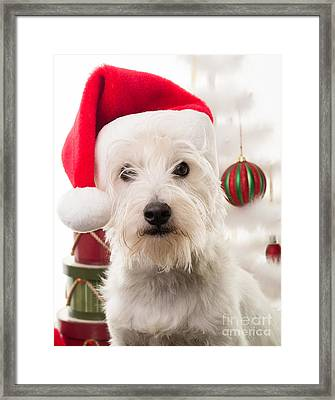 Christmas Elf Dog Framed Print by Edward Fielding