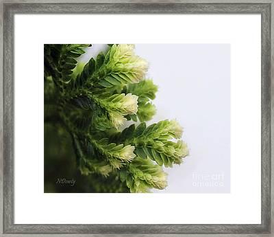 Christmas Fern Framed Print