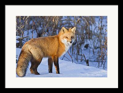 Zoological Framed Prints