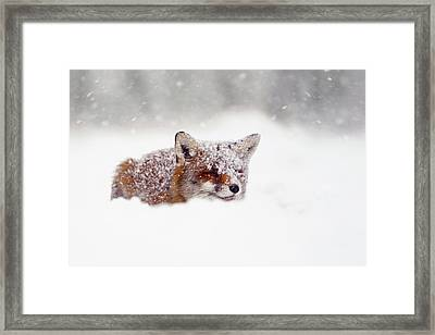 Christmas Fox Framed Print by Roeselien Raimond
