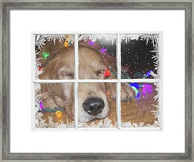Christmas Golden Retriever Framed Print by Maria Dryfhout