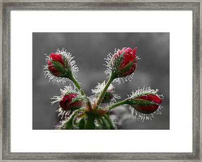Christmas In May Framed Print by Lori Deiter