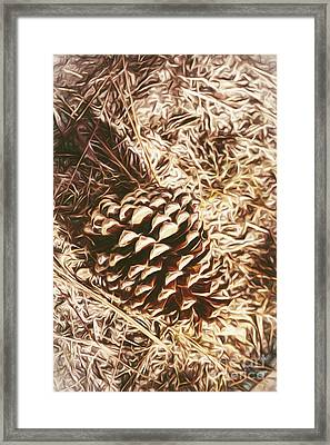 Christmas Pinecone On Barn Floor Framed Print by Jorgo Photography - Wall Art Gallery