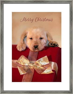Christmas Puppy Framed Print by Lori Deiter