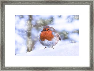 Framed Print featuring the photograph Christmas Robin by Scott Carruthers