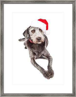 Christmas Santa Terrier Dog Laying Framed Print