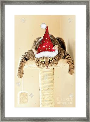 Christmas Splat Cat Framed Print