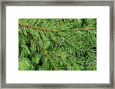 Christmas Tree Branch Background Framed Print by Olivier Le Queinec