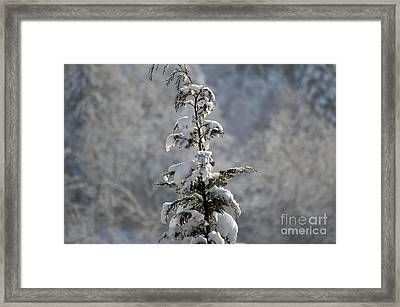 Christmas Tree In Snow - Winter In Switzerland Framed Print