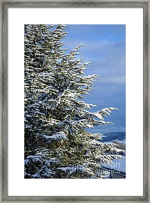 Christmas Tree - Winter In Switzerland Framed Print