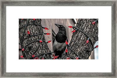Christmas Turkey Framed Print