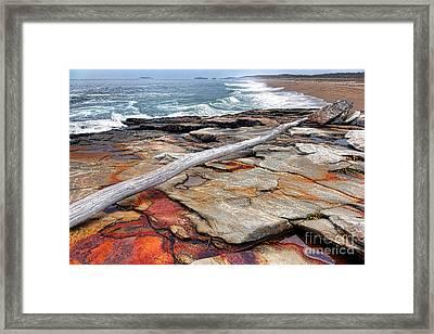 Chroma Reid State Park Framed Print by Olivier Le Queinec