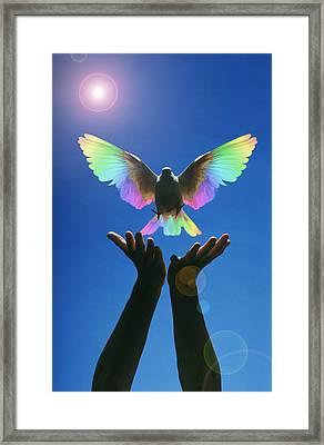 Chromatic Flight Framed Print by Gerard Fritz