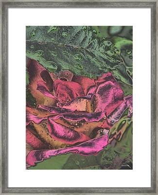 Chrome Rose 64182 Framed Print