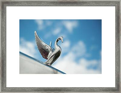 Chrome Swan Framed Print