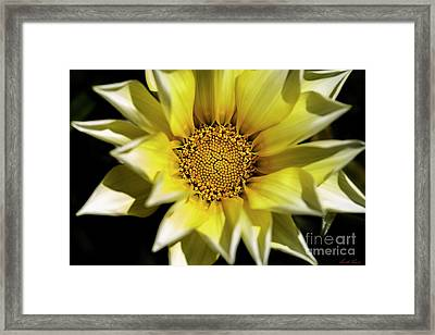 Framed Print featuring the photograph Chrysanthos by Linda Lees