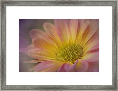 Chrysanthemum 3 Framed Print
