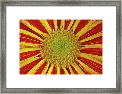 Framed Print featuring the photograph Chrysanthemum Close-up by Christine Amstutz