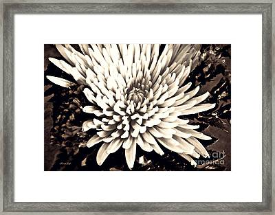 Framed Print featuring the photograph Chrysanthemum In Sepia 2  by Sarah Loft