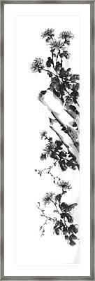 Chrysanthemum Stone 2 Framed Print by Chang  Lee