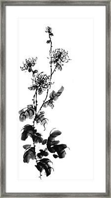 Chrysanthemum3 Framed Print by Chang  Lee