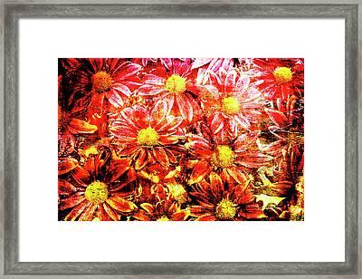 Chrysanthemums In Water 2 Framed Print
