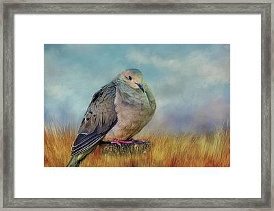 Chubby Dove Framed Print