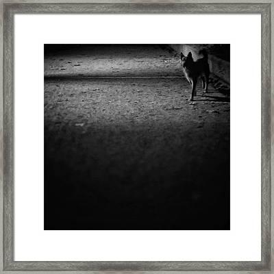 Chuvak #dogsofinstagram #dogs #pets Framed Print