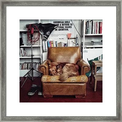 Chuvak  #dogsofinstagram #dog #animal Framed Print